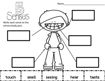 The 5 Senses Science Interactive Foldables and Activities Super Bundle