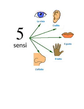 The 5 Senses in Italian