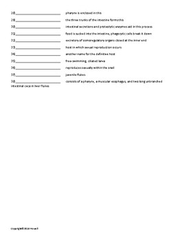 The Acoelomate Animals Vocabulary Quiz or Worksheet for Zoology