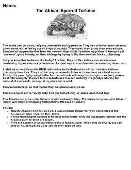 The African Spurred Tortoise Zoo Animal Article, Summary and Drawing Assignment