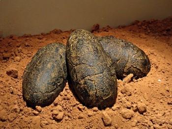 The Albertosaurus Mystery: Virtual Evidence Bag Journeys 3rd Grade Lesson 17