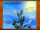 The All-Inclusive Photosynthesis/Cellular Respiration Powerpoint