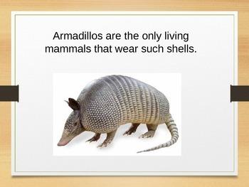 Amazing Armadillos:  Fun Facts and Photos
