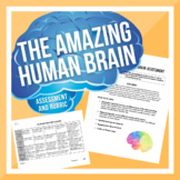 The Amazing Human Brain Assessment and Rubric