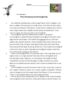 The Amazing Hummingbirds