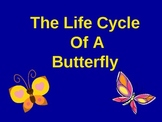 The Amazing Life Cycle of A Butterfly!