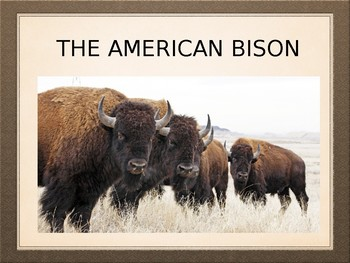 The American Buffalo