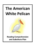 The American White Pelican - Reading Comprehension and Substitute Plan