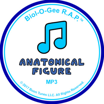 Anatomical Figure: Mp3 - Biol-O-Gee R.A.P.