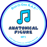 Anatomical Figure: Mp3 - Biol-O-Gee R.A.P.