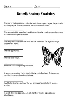 The Anatomy of a Butterfly PowerPoint (Diagram and Label)