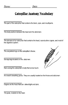 The Anatomy of a Caterpillar PowerPoint (Diagram and Label)