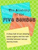 The Anatomy of the Five Senses