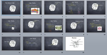 The Animal Cell Powerpoint Presentation Lesson
