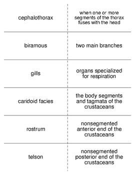 The Aquatic Mandibulates Vocabulary Flash Cards for Zoology