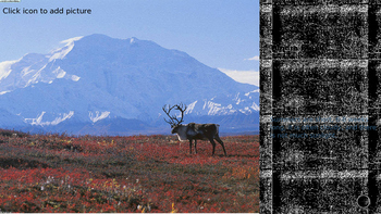 The Arctic Food Web Powerpoint