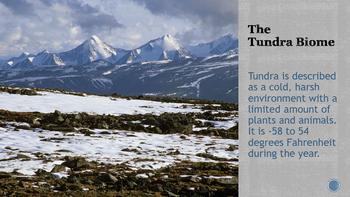 The Arctic Food Web eBook pdf