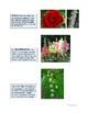 The Art of Art Appreciation - Van Gogh Irises