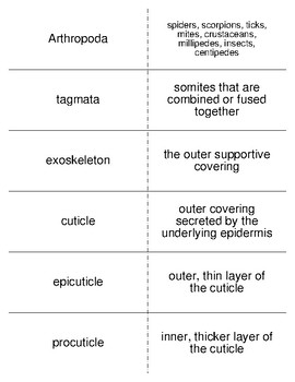The Arthropods Vocabulary Flash Cards for Zoology