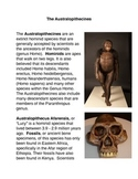 The Australopithecines Common Core Activity