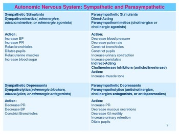 The Autonomic Nervous System Quick Review (Study Aid / Handout)