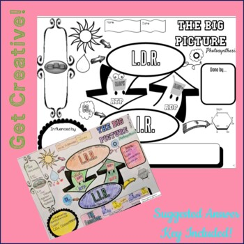 The BIG Picture Photosynthesis Doodle Notes