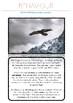 The Bald Eagle- Animal File One