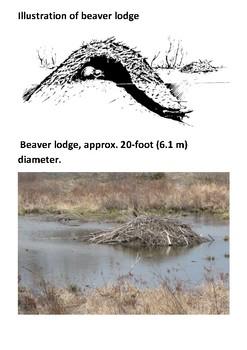 The Beaver Handout