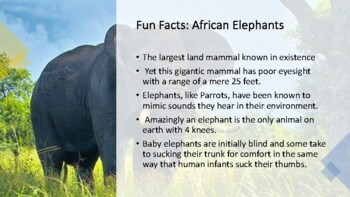 The Big Five Animals of Africa.