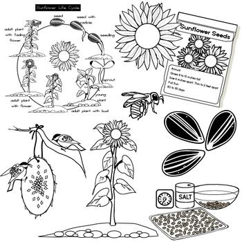 FREE Sunflower Clip Art Set -  Illustrations & Photos