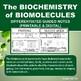 The Biochemistry of Biomolecules Foldable Graphic Organizer for INB