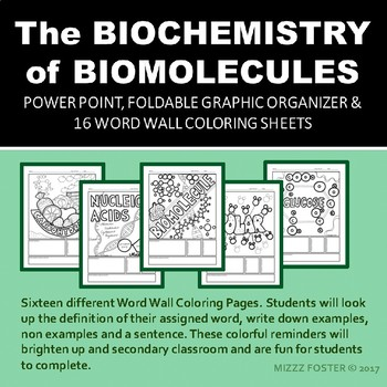The Biochemistry of Biomolecules Powerpoint, Foldable and 16 Word Wall Sheets
