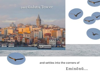 The Bird Feeder of Istanbul - picture books