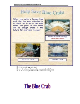 The Blue Crab Lesson
