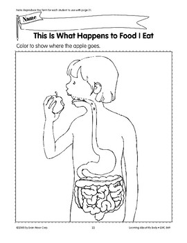 The Body Has Internal Parts: Stomach and Intestines