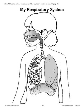 The Body Has Lungs for Breathing