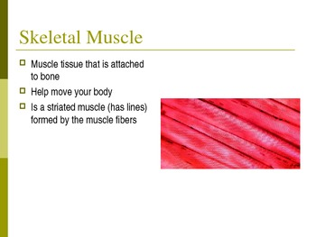 The Body Systems: Muscular System Powerpoint