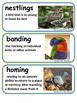 ReadyGen The Boy Who Drew Birds Vocabulary Word Wall Cards