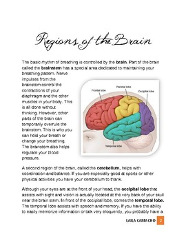 Physiology: The Brain