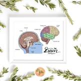 The Brain Graphic
