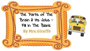 The Brain: Its parts and their jobs
