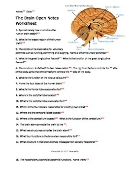 The Brain Open Notes Worksheet with KEY