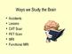 The Brain PPT