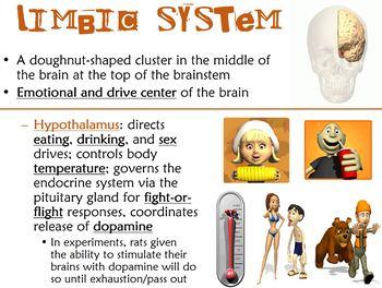 The Brain PowerPoint