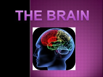 The Brain Psychology/Science Power Point IB