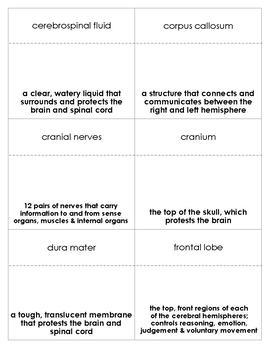 The Brain Vocabulary Bingo