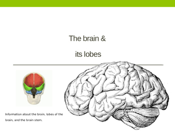 The Brain and Its Lobes PowerPoint