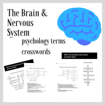 The Brain and Nervous System | Psychology Crosswords Review and Practice