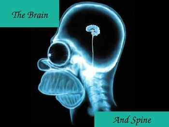 The Brain and Spine