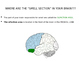 The Brain and Your Senses